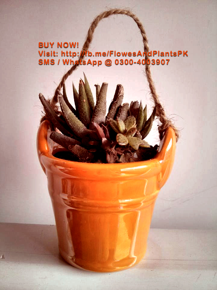 Flowers-Plants-Buy-Online-Gift-Lahore-Pakistan-Snake-Cactus