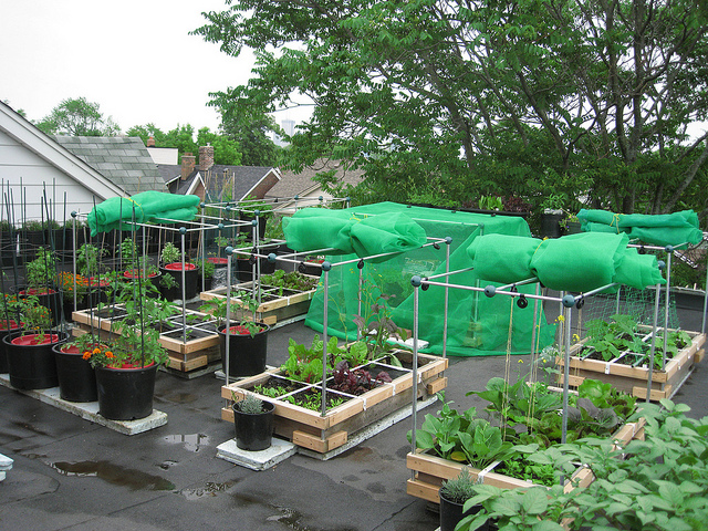 Growing Green Roof   Online Shopping   Home Shopping ...